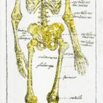 <b>Anatomie 2</b> <br />