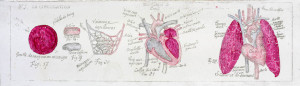 Anatomie 5