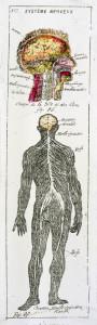 Anatomie 7