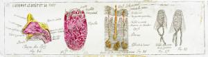 Anatomie 9